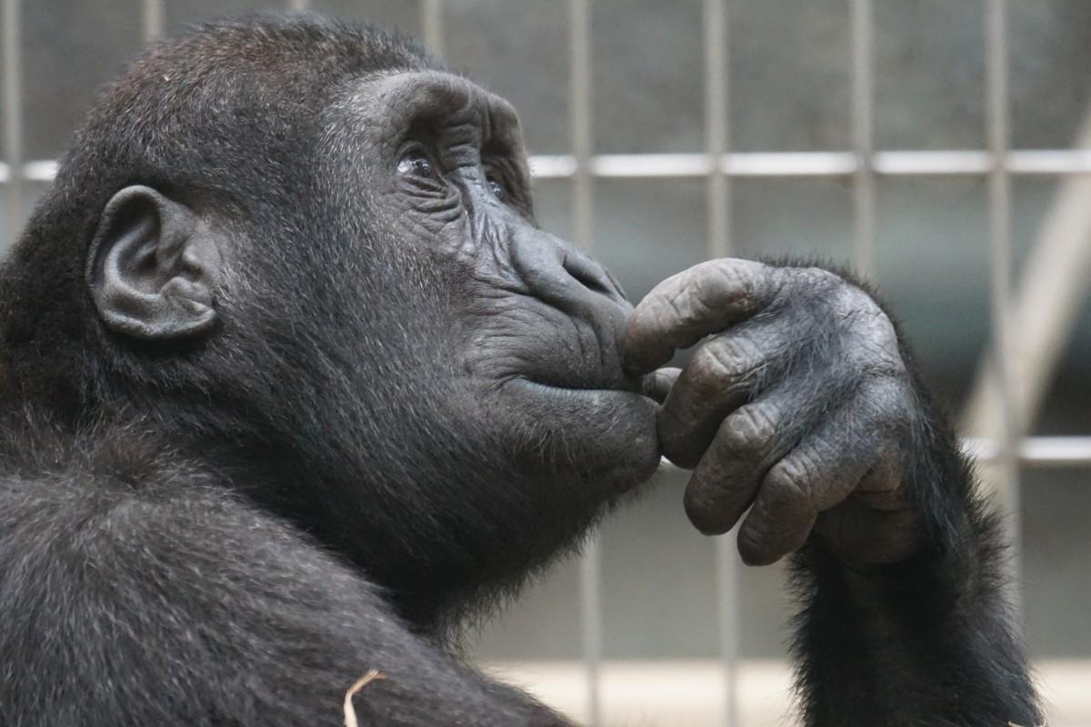 primate-1019101